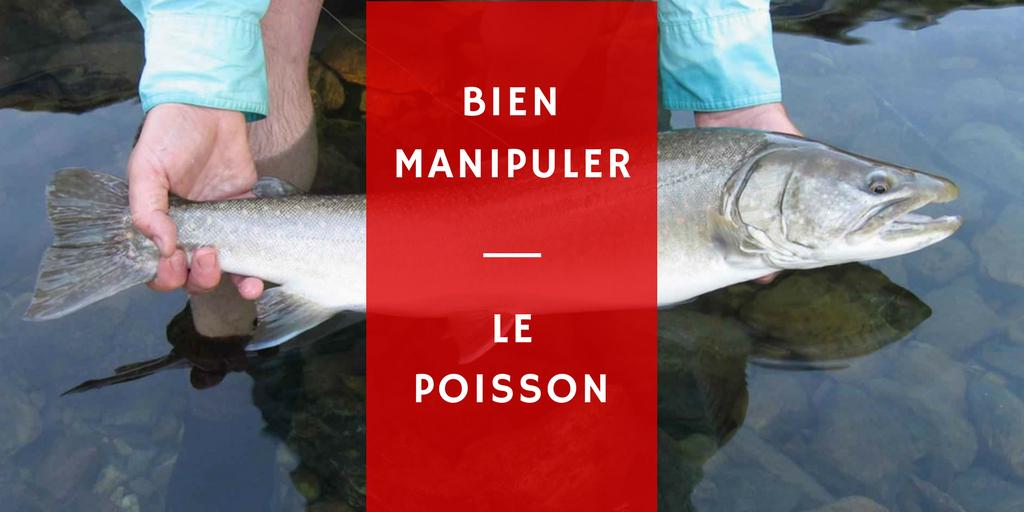pêche release catch nokill mouche mer relacher tenir poisson