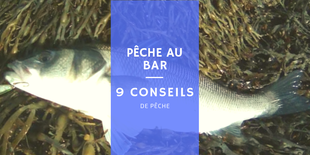 pêche au bar mer poisson conseils météo mer spots