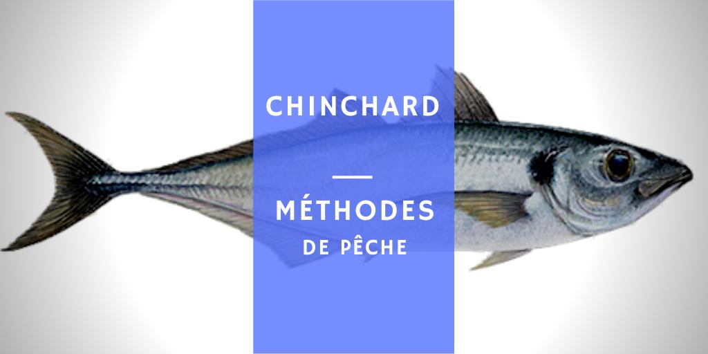 information de pêche et de cuisine sur le poisson chinchard